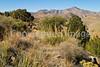 Fort Bowie Nat'l Historic Site, AZ - D6-C3 -0421 - 72 ppi