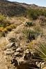 Fort Bowie Nat'l Historic Site, AZ - D6-C3#2-0009 - 72 ppi