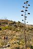 Fort Bowie Nat'l Historic Site, AZ - D6-C3 -0392 - 72 ppi