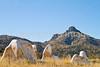 Fort Bowie Nat'l Historic Site, AZ - D6-C3 -0258 - 72 ppi
