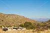Fort Bowie Nat'l Historic Site, AZ - D6-C3 -0232 - 72 ppi