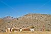 Fort Bowie Nat'l Historic Site, AZ - D6-C3 -0281 - 72 ppi