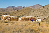 Fort Bowie Nat'l Historic Site, AZ - D6-C3 -0289 - 72 ppi