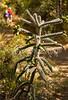 Fort Bowie Nat'l Historic Site, AZ - D6-C3 -0172 - 72 ppi