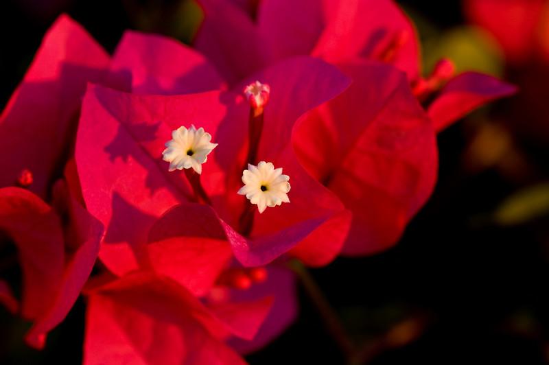 Flower 4341
