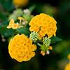 Flower 4353