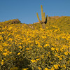 RLwildflowers031908_002