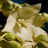 Flower 4376