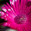 Flower_7022
