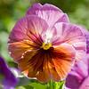 Flower_7019
