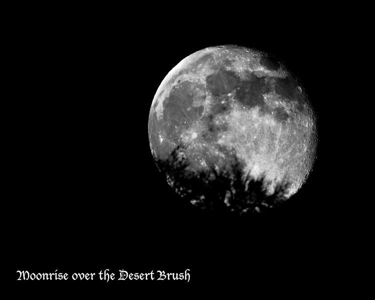 RM_D7000_moonrise_over_desert_brush_4371
