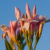 Flower 4339