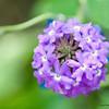 Flower 002