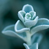 Flower 4349