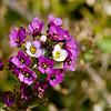 Flower_7029