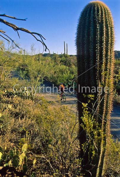 Biker on Hohokam Rd , west side of Saguaro NP in AZ - 1 - 72 ppi