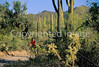 Biker on Hohokam Rd , west side of Saguaro NP in AZ - 2 - 72 ppi