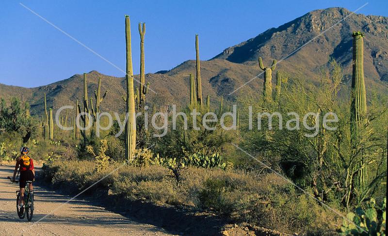 Biker on Hohokam Rd , west side of Saguaro NP in AZ - 15 - 72 ppi