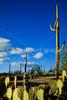 Biker on Hohokam Rd , west side of Saguaro NP in AZ - 10 - 72 ppi