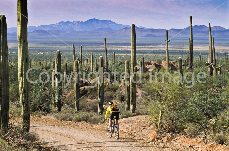 Biker on Hohokam Rd , west side of Saguaro NP in AZ - 37 - 72 ppi