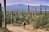 Biker on Hohokam Rd , west side of Saguaro NP in AZ - 37 - 72 ppi
