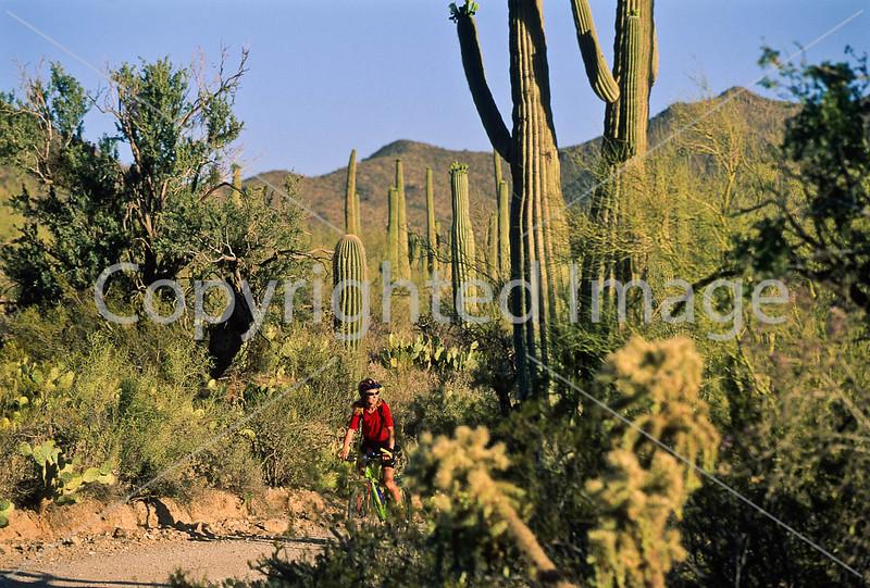 Biker on Hohokam Rd , west side of Saguaro NP in AZ - 29 - 72 ppi