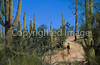 Biker on Hohokam Rd , west side of Saguaro NP in AZ - 4 - 72 ppi