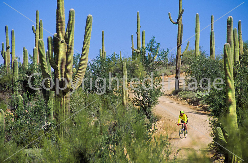 Biker on Hohokam Rd , west side of Saguaro NP in AZ - 13 - 72 ppi