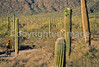 Ajo Mt  Drve, Diablo Mts , in Organ Pipe Cactus Nat'l Monument,  AZ - 10 - 72 ppi