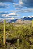 Ajo Mt  Drve, Diablo Mts , in Organ Pipe Cactus Nat'l Monument,  AZ - 11 - 72 ppi