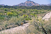 Ajo Mt  Drve, Diablo Mts , in Organ Pipe Cactus Nat'l Monument,  AZ - 52-Edit - 72 ppi