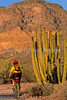 Ajo Mt  Drve, Diablo Mts , in Organ Pipe Cactus Nat'l Monument,  AZ - 55 - 72 ppi