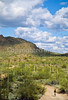 Ajo Mt  Drve, Diablo Mts , in Organ Pipe Cactus Nat'l Monument,  AZ - 13 - 72 ppi