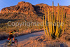 Ajo Mt  Drve, Diablo Mts , in Organ Pipe Cactus Nat'l Monument,  AZ - 14 - 72 ppi