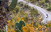 Cyclist(s) in Saguaro Nat'l Park, Arizona - 3-15 - C3 -0024 - 72 ppi-2