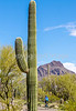 Sojourn cyclists in Tucson Mountain Park - D3 - C3-0368 - 72 ppi