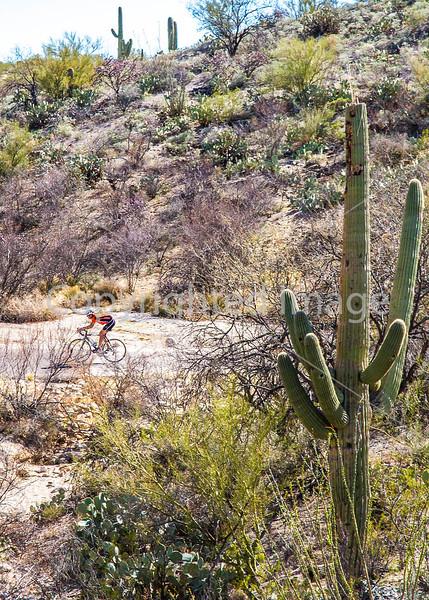 Cyclist(s) in Saguaro Nat'l Park, Arizona - 3-15 - C3 -0100 - 72 ppi-3