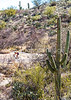 Cyclist(s) in Saguaro Nat'l Park, Arizona - 3-15 - C3 -0100 - 72 ppi-3