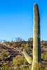 Cyclist(s) in Saguaro Nat'l Park, Arizona - 3-16 - C3 -0064 - 72 ppi