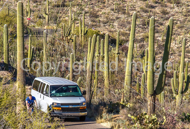 Cyclist(s) in Saguaro Nat'l Park, Arizona - 3-16 - C3 -0344 - 72 ppi-2