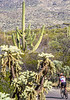 Cyclist(s) in Saguaro Nat'l Park, Arizona - 3-15 - C2 -0021 - 72 ppi-2