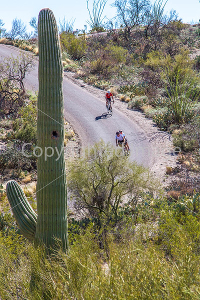 Cyclist(s) in Saguaro Nat'l Park, Arizona - 3-15 - C3 -0056 - 72 ppi