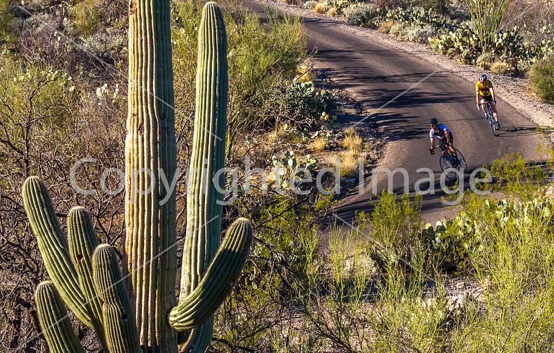 Cyclist(s) in Saguaro Nat'l Park, Arizona - 3-16 - C3 -0122 - 72 ppi-2
