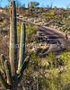 Cyclist(s) in Saguaro Nat'l Park, Arizona - 3-16 - C3 -0122 - 72 ppi-3