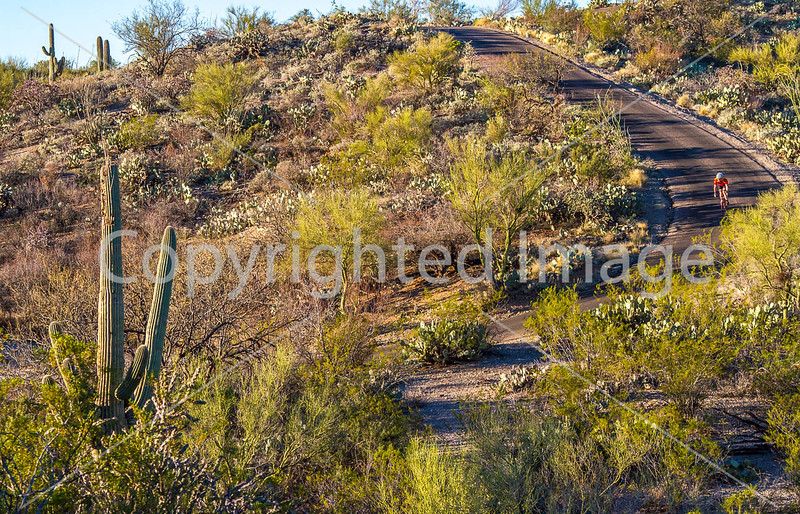 Cyclist(s) in Saguaro Nat'l Park, Arizona - 3-16 - C3 -0033 - 72 ppi
