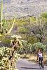 Cyclist(s) in Saguaro Nat'l Park, Arizona - 3-15 - C2 -0018 - 72 ppi-2