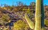 Cyclist(s) in Saguaro Nat'l Park, Arizona - 3-16 - C3 -2 - 72 ppi  #3