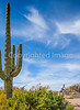 Sojourn cyclists in Saguaro NP East - D2-C2-0062 - 72 ppi