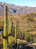 Cyclist(s) in Saguaro Nat'l Park, Arizona - 3-16 - C1 -0049 - 72 ppi #2-2