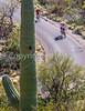 Cyclist(s) in Saguaro Nat'l Park, Arizona - 3-15 - C3 -0051 - 72 ppi-3